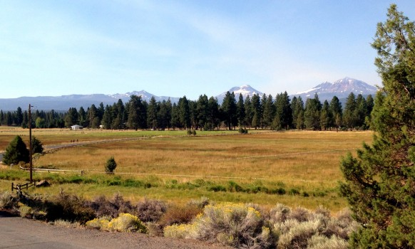 Meadow in Sisters, OR.